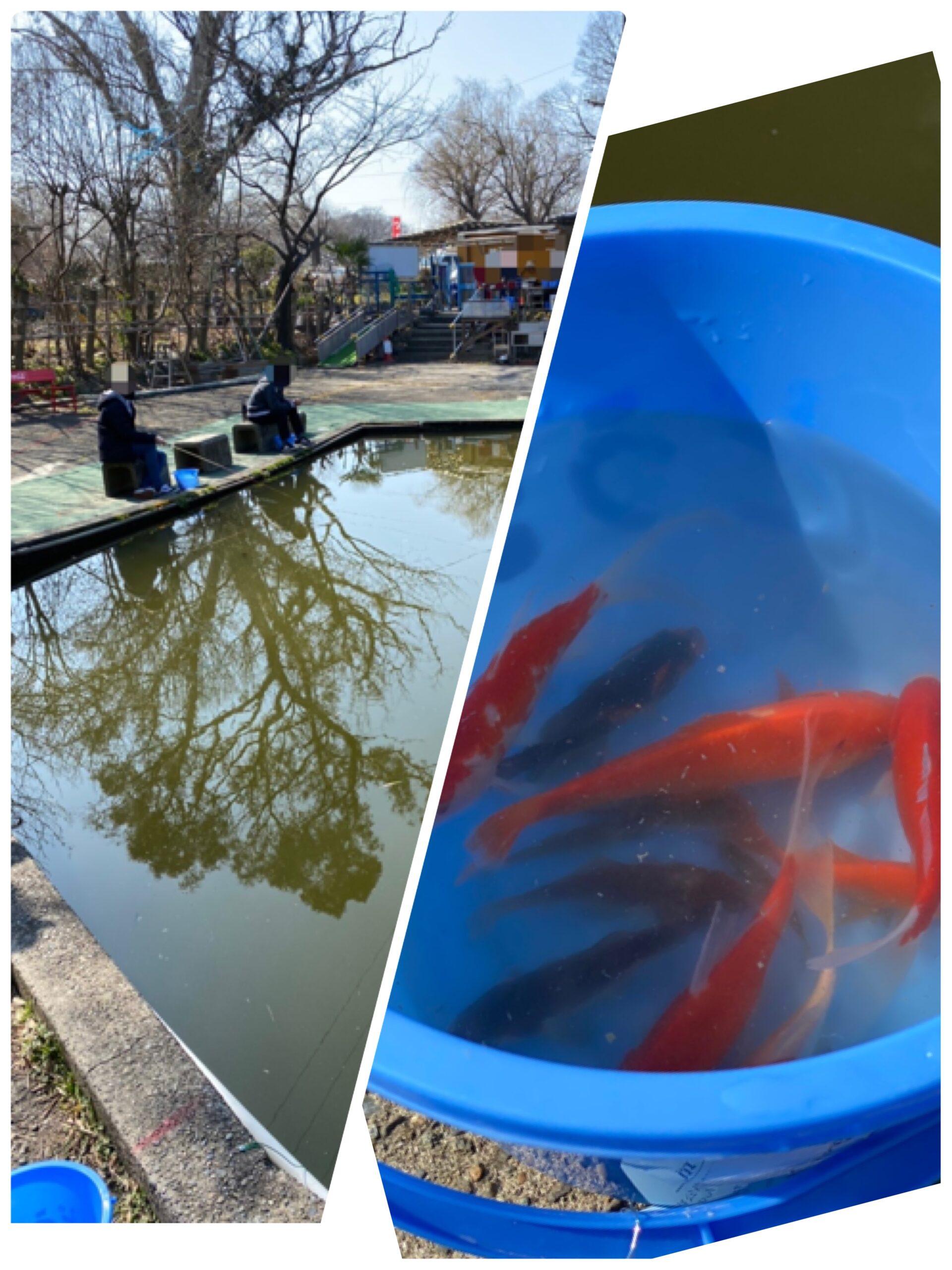 戸田市『彩湖・道満グリーンパーク』の『道満河岸つり場』で金魚釣りしてきた。